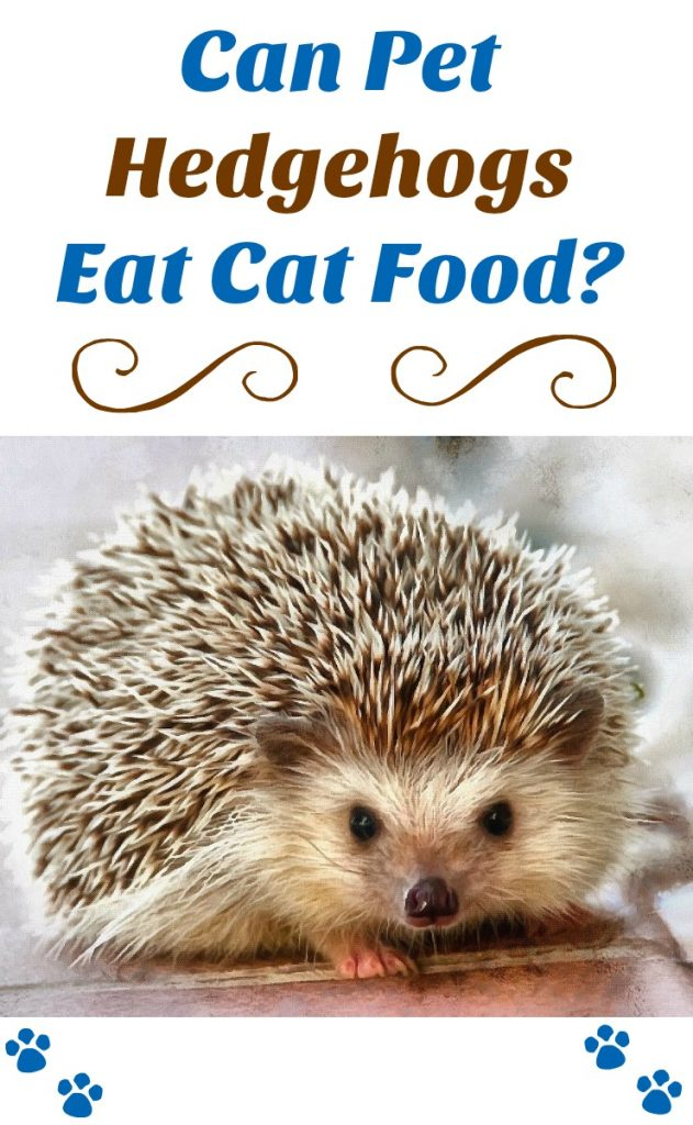 Hedgehog food can pet hedgehogs eat cat food