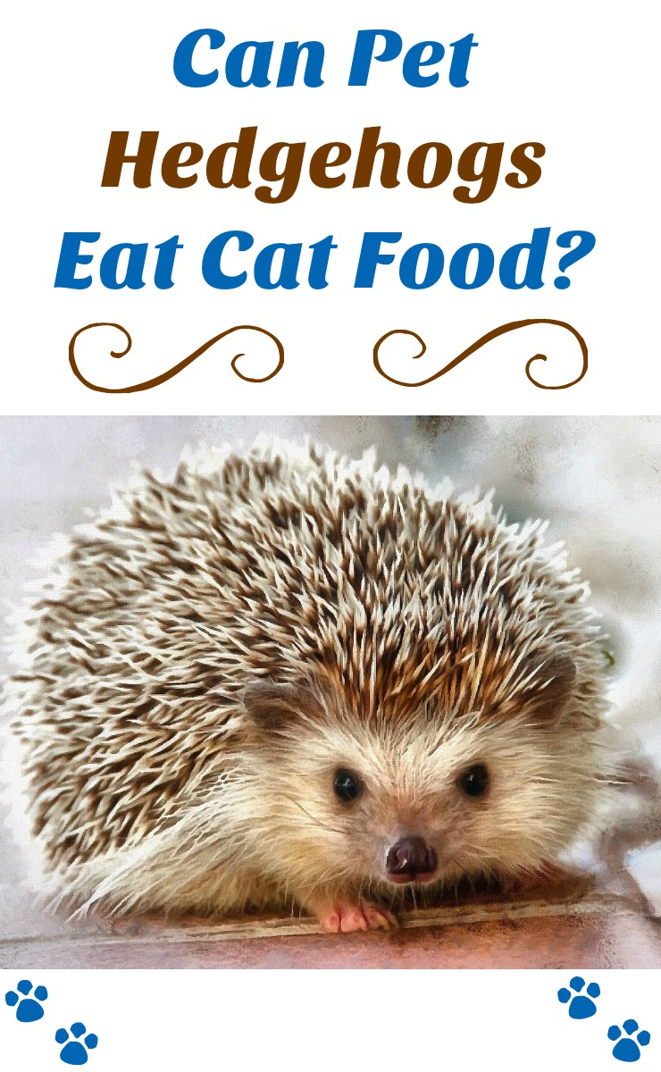 High Protein Cat Food For Hedgehogs