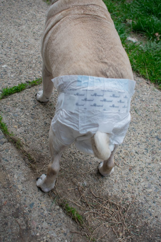PAW INSPIRED Ultra Protection Female Disposable Dog Diapers review